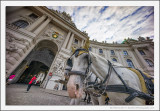 Horse and Hofburg Palace