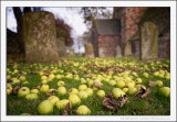 Autumn, Apples and Graves