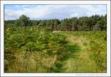 Bracken Forest