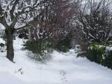 Villedieu-sneeuw-02.jpg