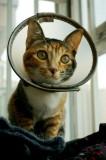 Cat-Mi Mi