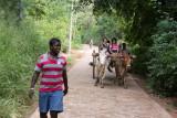 Sri-Lanka-033-Habarana-Do-Village-Bullock-Ride.jpg