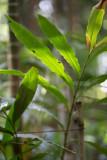 Sri-Lanka-061-Spice-Garden.jpg