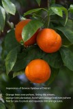 001 Greece Oranges.jpg