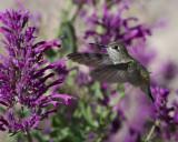 2013 Hummingbirds