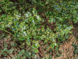Hoyt Arboretum 2014 03 (Mar) 11