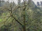 Eagle Creek, Columbia Gorge 2014 04 (Apr) 18