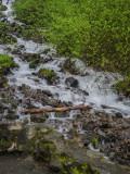 Wahkeena/Multnomah Creek Trails in Columbia Gorge, Oregon 2014 04 (Apr) 25