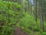 Columbia Gorge Herman Creek Trail to Cedar Swamp