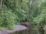 Larch Mt and Franklin Ridge Trails, Columbia Gorge, Oregon, U.S.A. 2014 06 (Jun) 15
