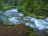 Paradise Park Trailhead to Paradise Park, Mt. Hood, Oregon, U.S.A 2014 07 (Jul) 25