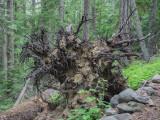 U.S.A., Oregon, East of Mount Hood, Gumjuwac Trailhead to Lookout Mountain 2014 08 (Aug) 16