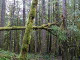 Salmon River Trails, Salmon-Huckleberry Wilderness, Oregon, U.S.A.  2014 12 (Dec) 13