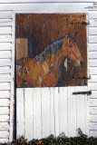 Fading Equine