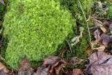 Green Moss on the Forest Floor