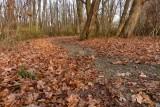 A November Hiking Trail