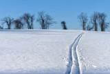 Ski to the Tree Line