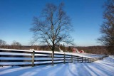 Lone Tree, Great Barn & Snow