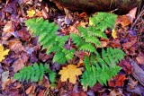 Lush ferns on the forest floor.