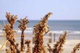 Winter on the Dunes
