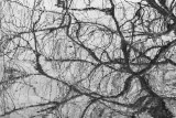 Branches Reflection