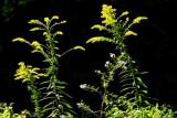 Creek-side Flowers in Early Fall