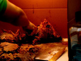 Observations: Butchered