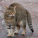 4/6 A not so friendly kitty in Öregrund harbour