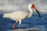 Southwest Florida critters & scenery 2014