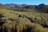 Scrub meadow at 12,000'
