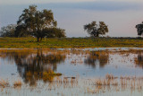 Tree Reflections in Vernal Pools