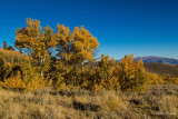 Fall comes to Dunderberg Meadow