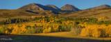 Dunderberg Meadow in morning glow