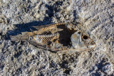 Come and Gone at Salton Sea