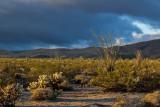 Desert Landscape and Ocotillo Bloom