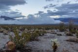 Barrel and Chola Cactus