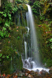 Ephemeral Falls along Agness Road