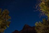 Starlit Canopy
