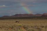 Navajo Nation Home