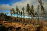 The Kalmiopsis Wilderness