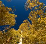 Tis the season in the Estern Sierra of California
