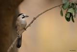 birds_colecetion