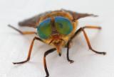 Macro - Flies and Hovers