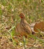 Birding in and around Udaipur