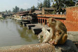 363 - Pashupathinath, Kathmandu