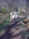 On the trail at Radnor Lake
