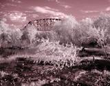 bridge foliage infared