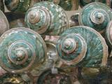 Unusual and colorfulFlorida beach shells