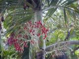 Tropical vegitation aboundsin Key West