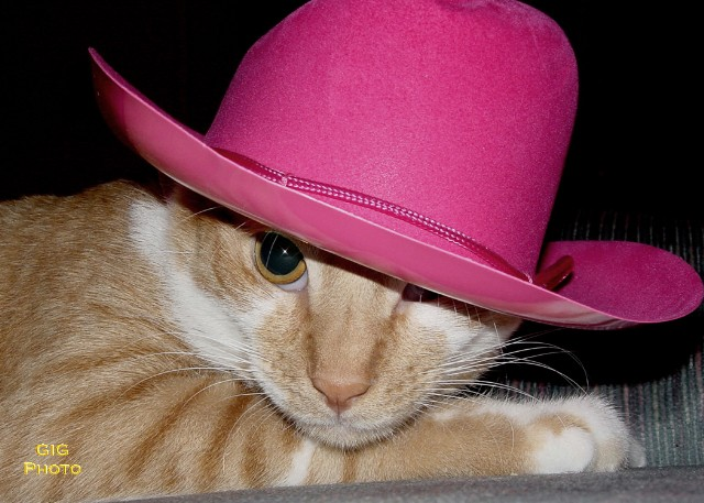 cat in a pink stetson.JPG